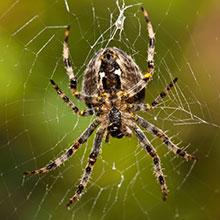 Spinnenoverlast